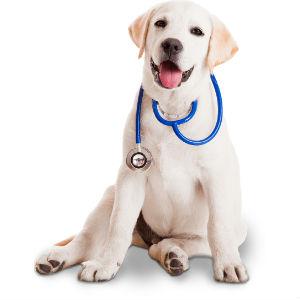 услуги ветеринарной клиники в москве