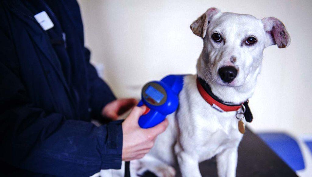 чипирование собак для вывоза за рубеж в Москве