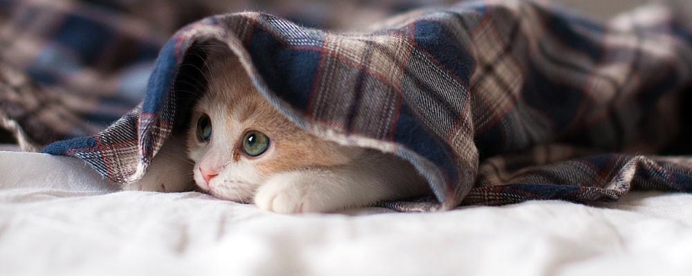 кремация кошек в Удельной фото