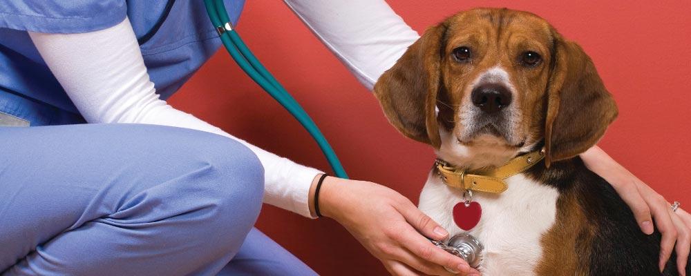 лечение собак в Власихе фото