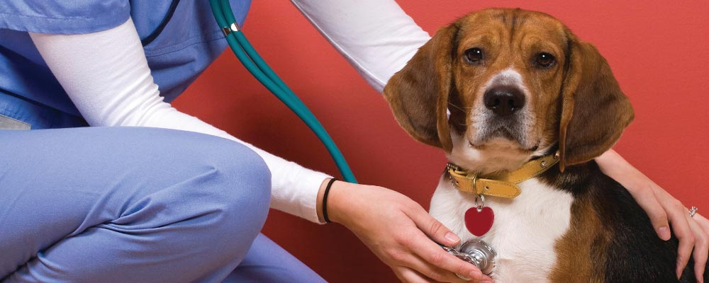 Лечение собак возле станции метро Измайловская фото