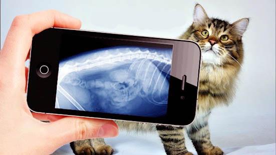 рентген животных в москве, рентген кошки, рентген кота