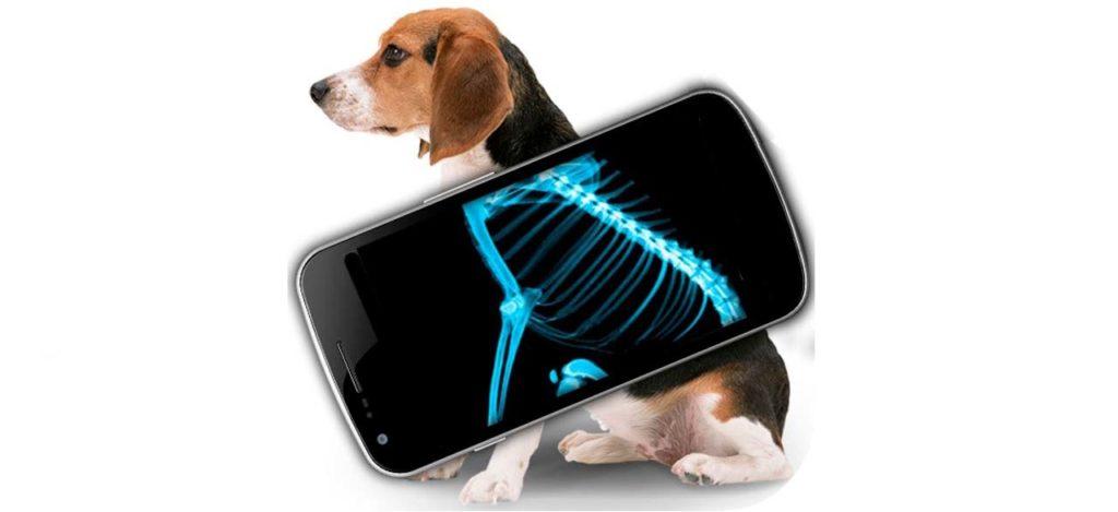 рентген собак, рентген собак в Москве, рентген животных