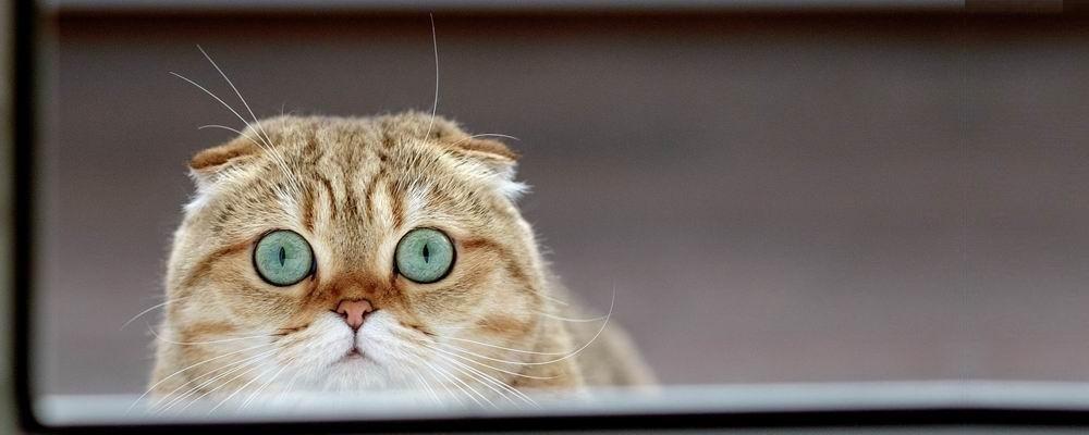 стерилизация кошек в Мытищах фото