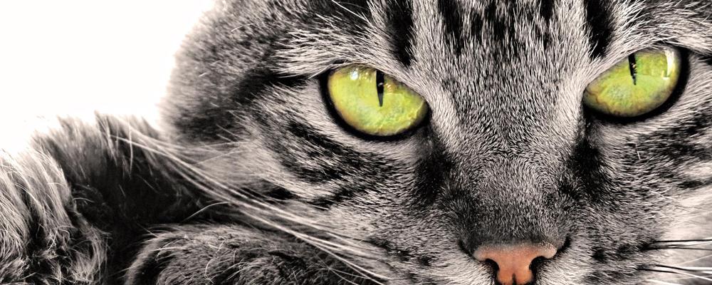 усыпление кошек в Центральном округе (ЦАО) фото