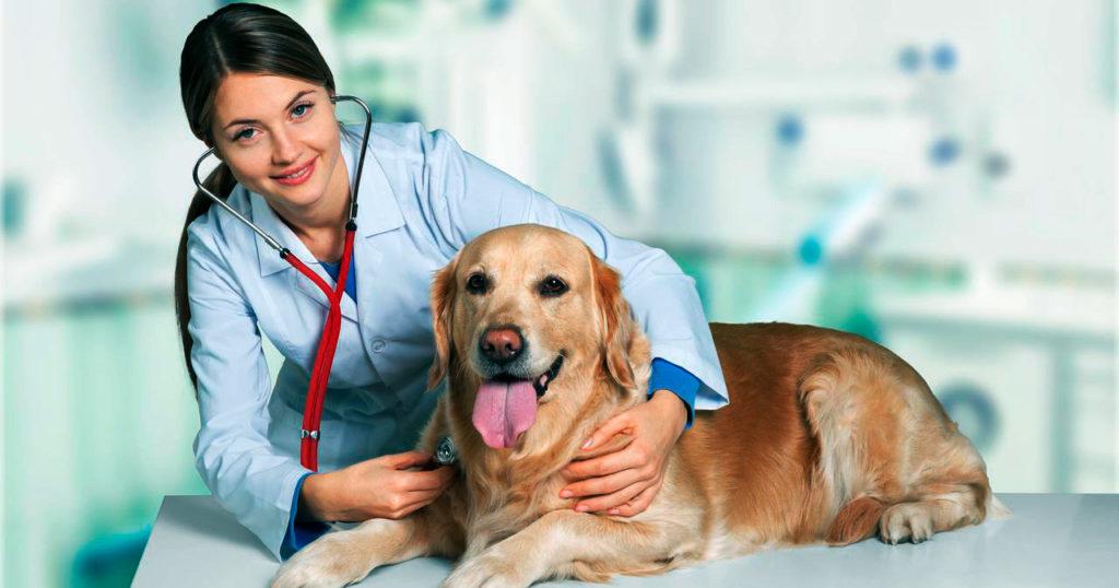 ЭКГ собаке, ЭКГ для собаки, ЭКГ животных в Москве