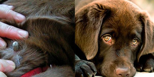 лечение клещей у собаки в Москве