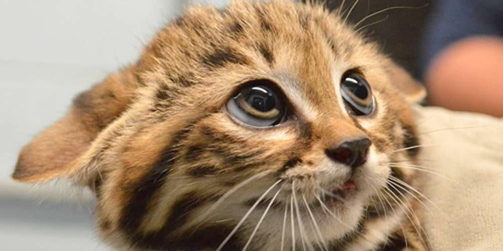 лечение лишая у кошек фото