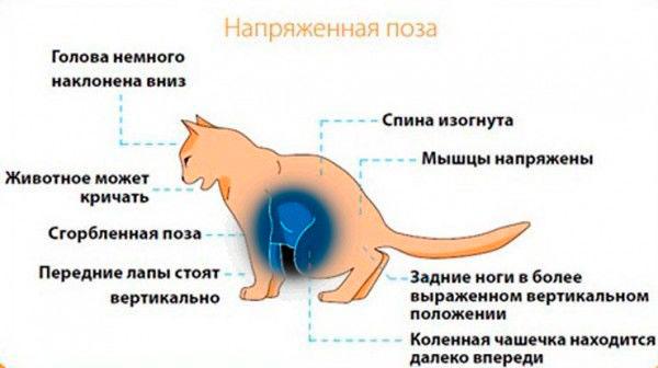 лечение мочекаменной болезни у котов в Москве