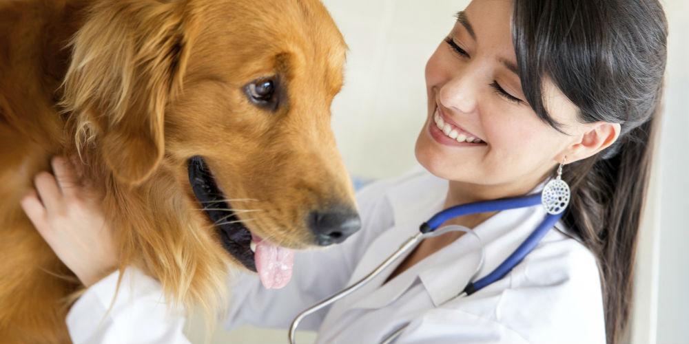 ветеринарная клиника срочно фото