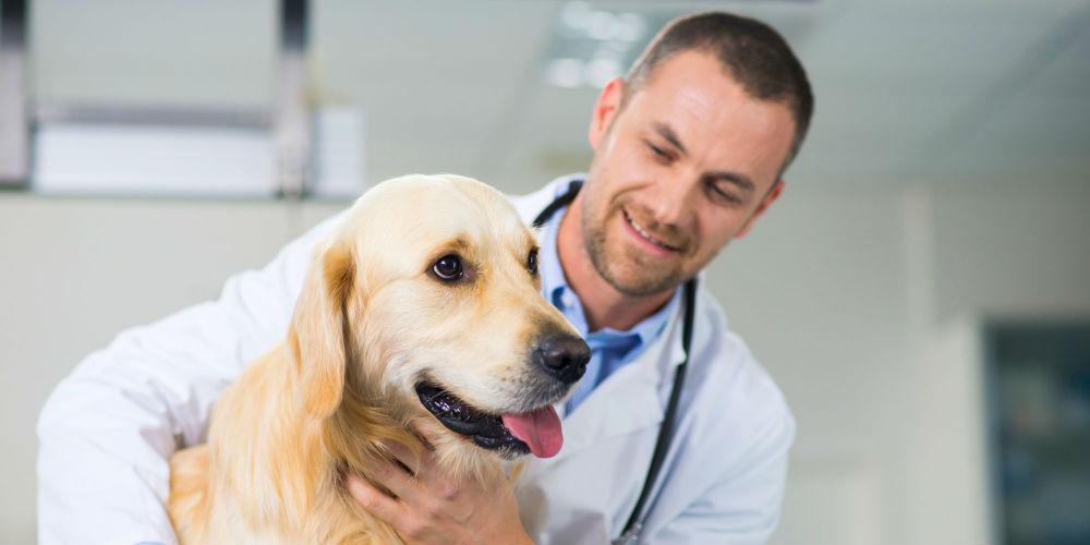ветеринар в москве