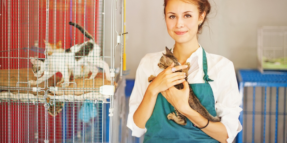 вызов ветеринара в москве