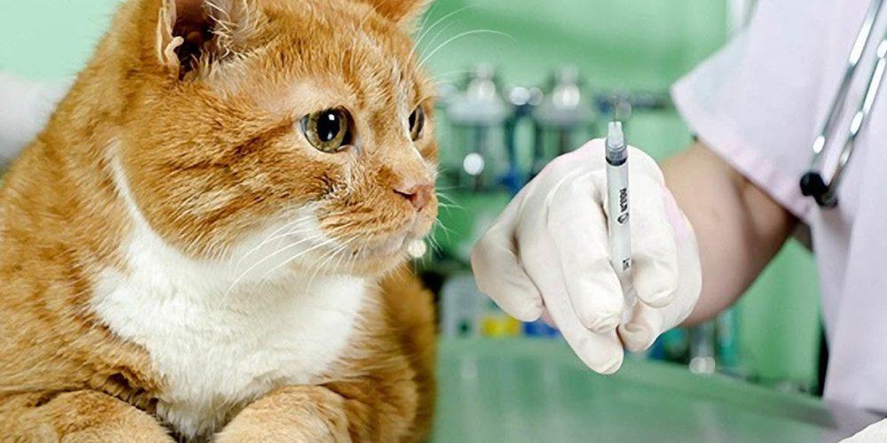 вызов ветеринара на дом фото
