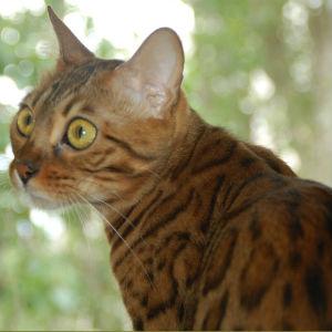 лечение аллергии у кошек в москве фотография