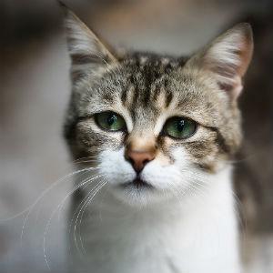 лечение аллергии у кошек фото