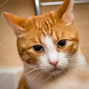 лечение слезных каналов у кошек в Москве фотография