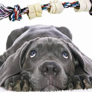 лечение воспаления у собак фото