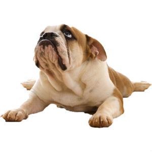 Кастрация мелких собак фото