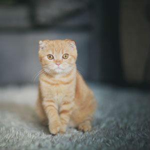 Стерилизация кошек лапароскопическим методом фото