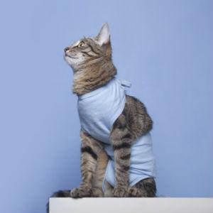 Стерилизация кошки после течки в Москве изображение