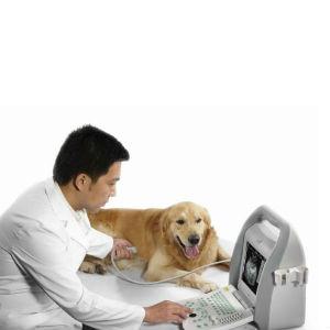 УЗИ для собаки фото