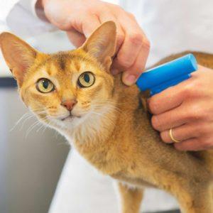 Чипирование кошек фото