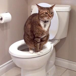 Лечение поноса у кошки фото