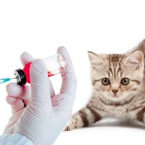 Прививка от бешенства кошке фото