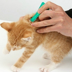 Прививки для кошек для выезда за границу фото